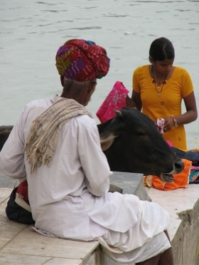 holy-cow-india.jpg