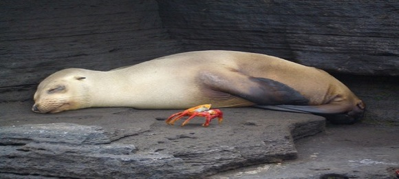 galapago-islands-seals.jpg