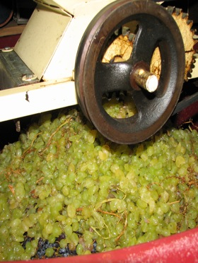 grape-crusher-wine